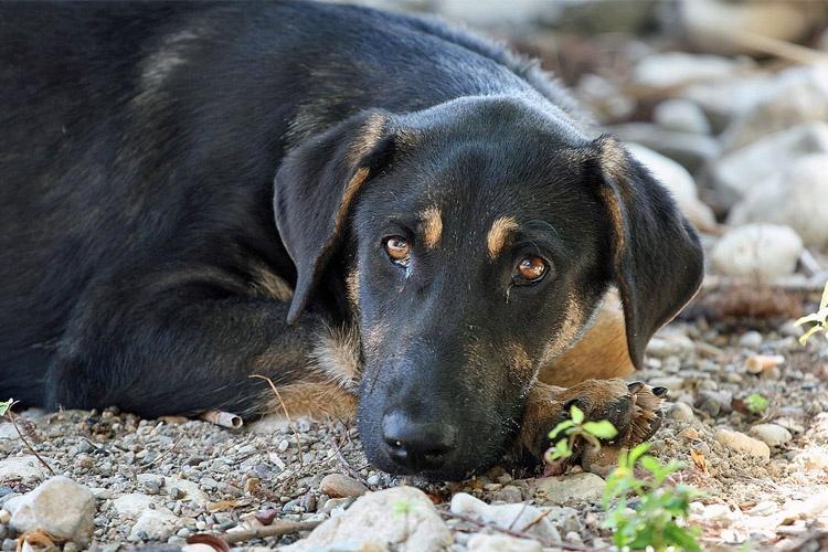 Image result for سگ ناراحت