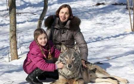 این دخترهای روسی با گرگ زندگی می کنند