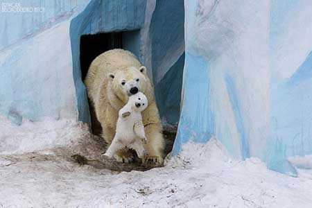 تصاویر و عکس های خنده دار از دنیای حیوانات