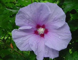 این گیاه قند خون را کاهش می دهد