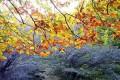 دلیل علمی تغییر رنگ درخت در پاییز