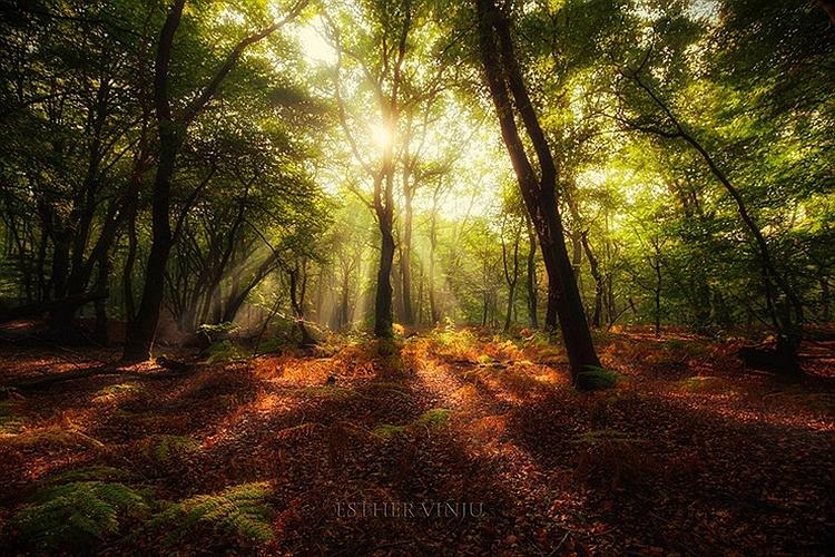 عکس های جالب و خوشگل طبیعت