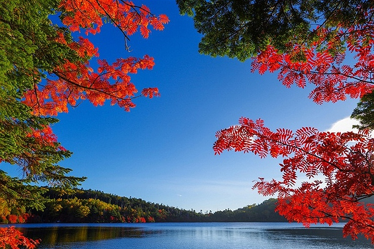 Image result for ?عکسی زیبا و دلنشین از طبیعت ومهربانی?