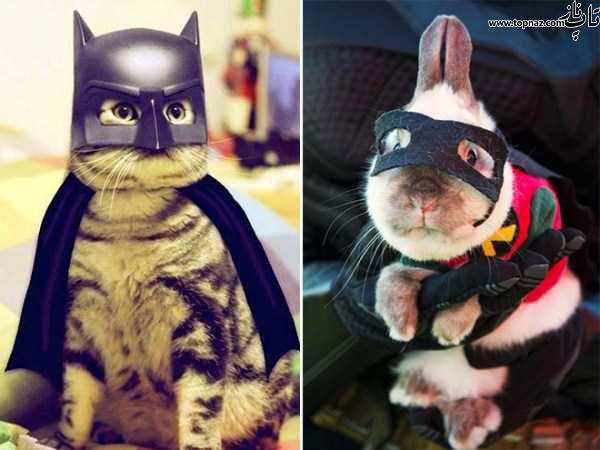 عکس خنده دار سگ و گربه