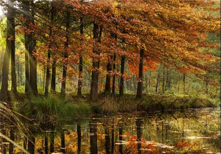 زیباترین منظره های پاییز در کشورهای جهان +تصاویر