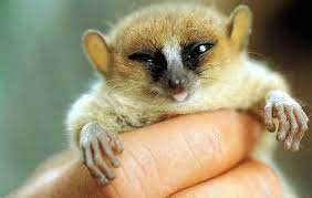 عکس کوچکترین پستاندار جهان