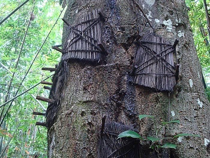 Toraja-burials9