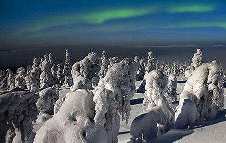 عکس های جنگل یخ زده (زادگاه بابانوئل) فنلاند