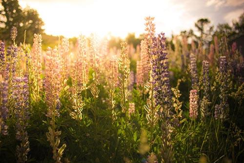 سری جدید عکس های زیبا و آرامش بخش از طبیعت