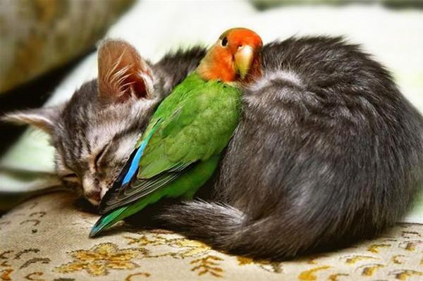 عکس های گربه های ناز