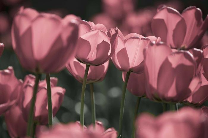 عکس های دیدنی از گل ها