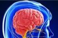 ورزش برای مغز بهتر است یا حل تمرین ریاضی؟
