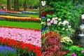 تصاویر زیباترین باغ های دنیا