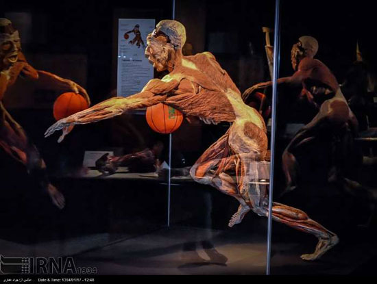 عکس های موزه ای با بدن انسان های مرده و خشک شده!