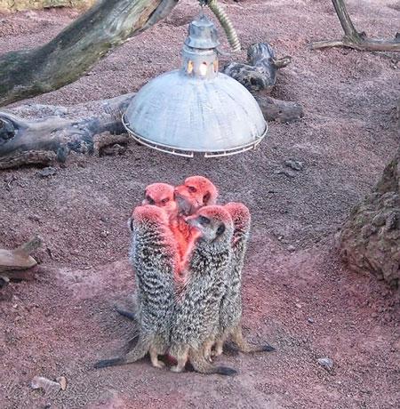 عکس های بمب خنده از حیوانات