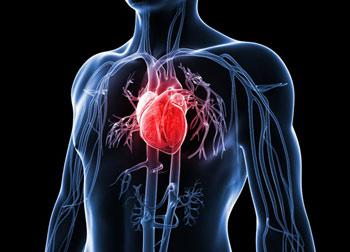 سلامت قلب را با این کارها به خطر نیندازید!