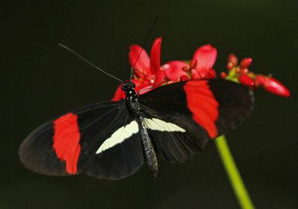 عکس پروانه های زیبا