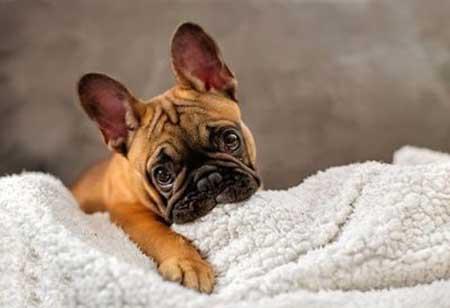 تصاویر بامزه از توله سگ های ناز