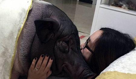 رابطه عاشقانه و چندش آور دختر جوان با خوک