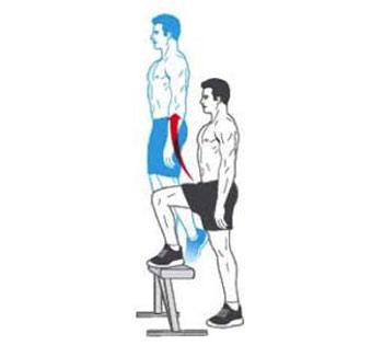 عضلات شکم, عضلات ران, ورزش, تقویت عضلات ران و شکم,