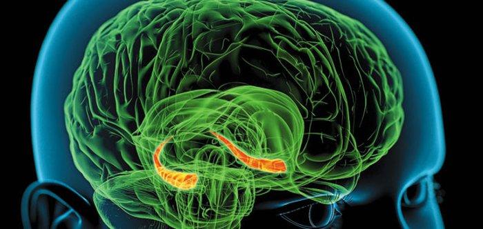 memory-hippocampus-brain