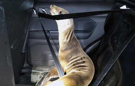 عکس های جالب ارتباط انسان با حیوان