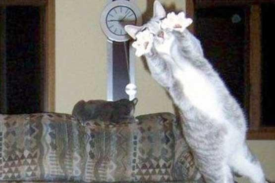 عکس های سلفی خنده دار و بامزه با حیوانات