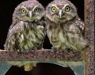 عکس های رمانتیک و عاشقانه از پرندگان
