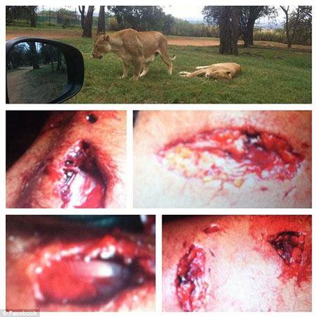 شیر وحشی دختر 22 ساله را زنده خورد!