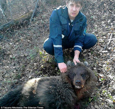 اخبار,اخبارحوادث,حمله خرس