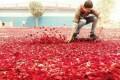 تبلیغ جالب شرکت سونی : گل باران کردن آسمان