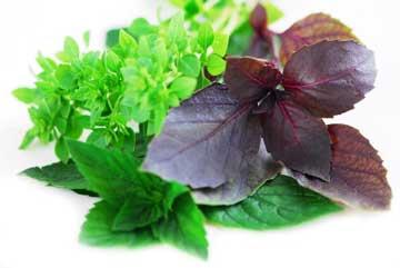 طب سنتی مسمومیت غذایی