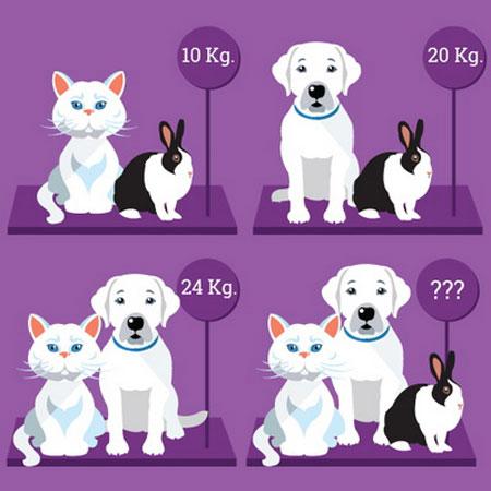 تست هوش : پیدا کردن وزن حیوانات