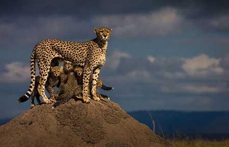 عکس های جالب و دیدنی از حیوانات مختلف