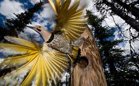 اخبار,اخبار گوناگون ,  گرفتن عکس از پرندگان