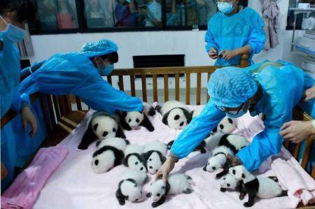عکس های مهد کودک خفن و جالب در چین
