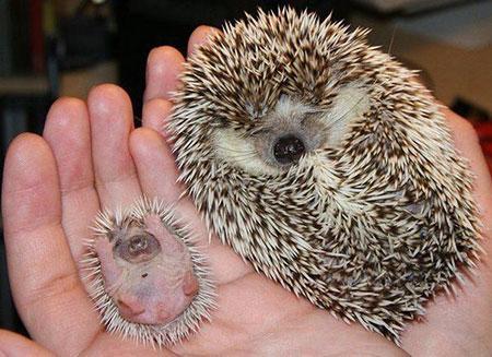 عکس جالب و بامزه از کودکی حیوانات