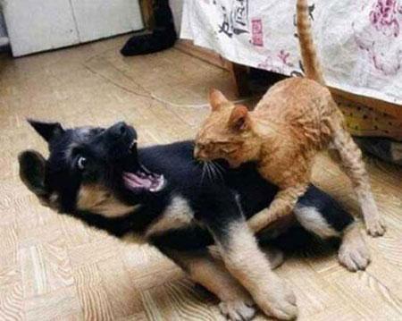 عکس های خنده دار و توپ از حیوانات