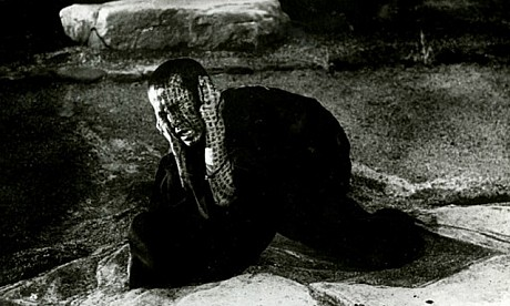 "نقد و بررسی ""فیلم کوایدن Kwaidan"""