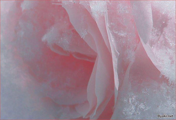 عکس گل های زیبا و انرژی بخش