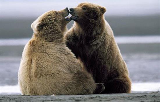 عکس های جالب و عاشقانه بوسیدن حیوانات