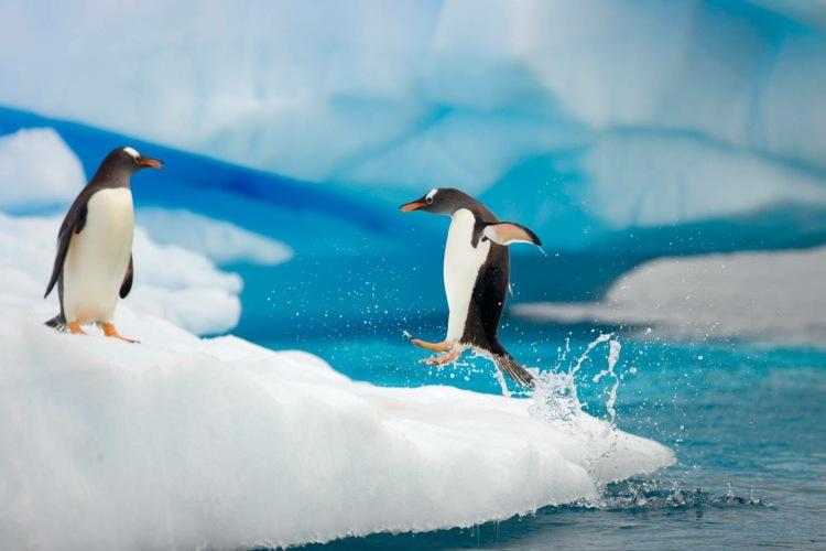 پنگوئن ها در جنوبگان