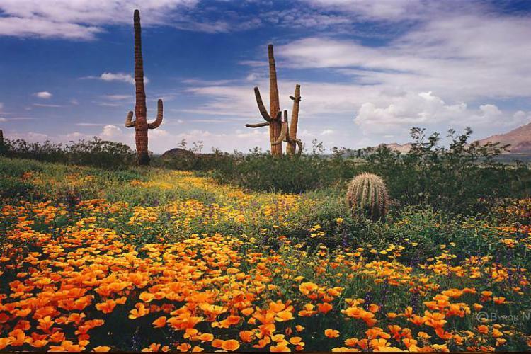 بیابان سونورا در آمریکا و مکزیک