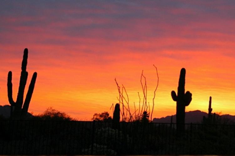 بیابان سونوران در آمریکا و مکزیک