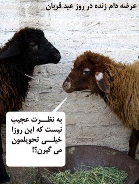 عکس های خنده دار عید قربان