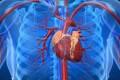 عوامل خطرساز برای قلب شما
