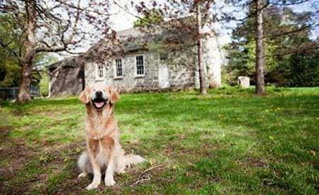 عکس های سگ خنده رو و بامزه