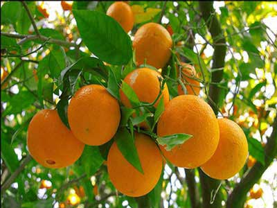با خوردن این میوه ها پوست محکم و سفتی داشته باشید