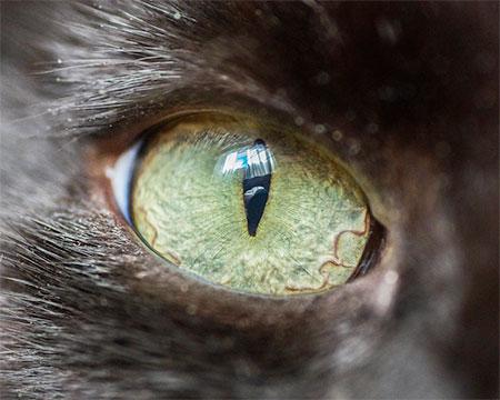 عکس های بسیار زیبا از چشم گربه ها