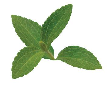 تقویت لثه با داروهای گیاهی